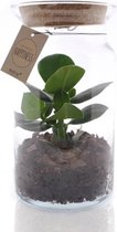 e-bloom Kamerplant - Mini Jungle met licht - Ecosysteem - Terrarium plant