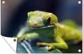 Groene gekko op een blad 180x120 cm XXL / Groot formaat!