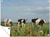 Tuinposter Friese koe - Drie Friese koeien in een grasveld in Nederland Tuinposter 160x120 cm - Tuindoek/Buitencanvas/Schilderijen voor buiten (tuin decoratie) XXL / Groot formaat!