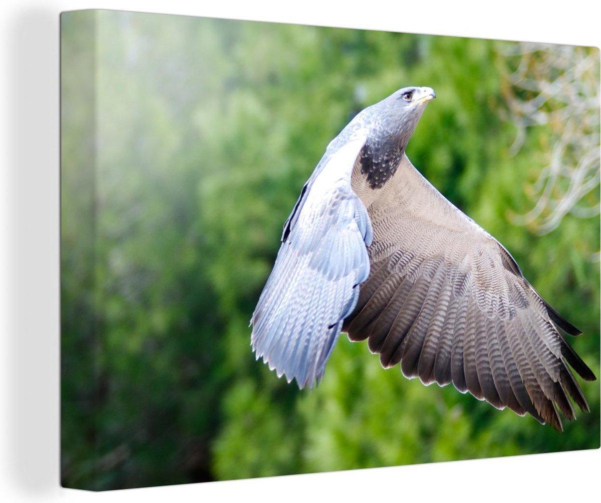 Slechtvalk vliegt met open vleugels Canvas 180x120 cm - Foto print op Canvas schilderij (Wanddecoratie woonkamer / slaapkamer) XXL / Groot formaat!