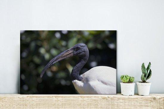 Close up van een witte ibis Canvas 30x20 cm - klein - Foto print op Canvas schilderij (Wanddecoratie woonkamer / slaapkamer)