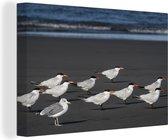 Groep reuzensternen op het strand Canvas 60x40 cm - Foto print op Canvas schilderij (Wanddecoratie woonkamer / slaapkamer)
