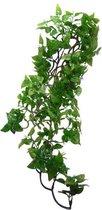 Komodo Philodendron Plant - 60 cm