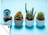Tuinposter - Cactus in vermomming - 160x120 cm - XXL