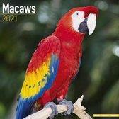 Macaws Kalender 2021