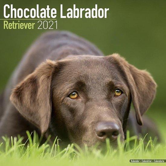 Labrador Retriever Bruin Kalender 2021