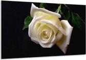 Glasschilderij Roos | Wit, Zwart, Groen | 120x70cm 1Luik | Foto print op Glas |  F000537