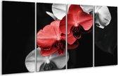 Glasschilderij Orchidee | Rood, Zwart, Grijs | 160x80cm 4Luik | Foto print op Glas |  F002728