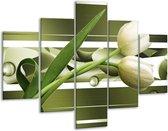 Glasschilderij Tulp | Grijs, Wit, Groen | 100x70cm 5Luik | Foto print op Glas |  F004685