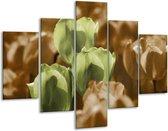 Glasschilderij Tulpen | Bruin, Groen, Zwart | 100x70cm 5Luik | Foto print op Glas |  F002763