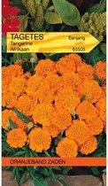 Oranjebandzaden -  Tagetes, Afrikaan Tangerine