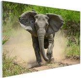 Rennende olifant Glas 180x120 cm - Foto print op Glas (Plexiglas wanddecoratie) XXL / Groot formaat!