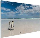 Koningspinguins op het strand Glas 90x60 cm - Foto print op Glas (Plexiglas wanddecoratie)