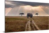 Olifant in het Masai Mara National Park in Kenia Aluminium 60x40 cm - Foto print op Aluminium (metaal wanddecoratie)