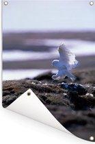 Sneeuwuil landt op het strand Tuinposter 120x180 cm - Tuindoek / Buitencanvas / Schilderijen voor buiten (tuin decoratie) XXL / Groot formaat!