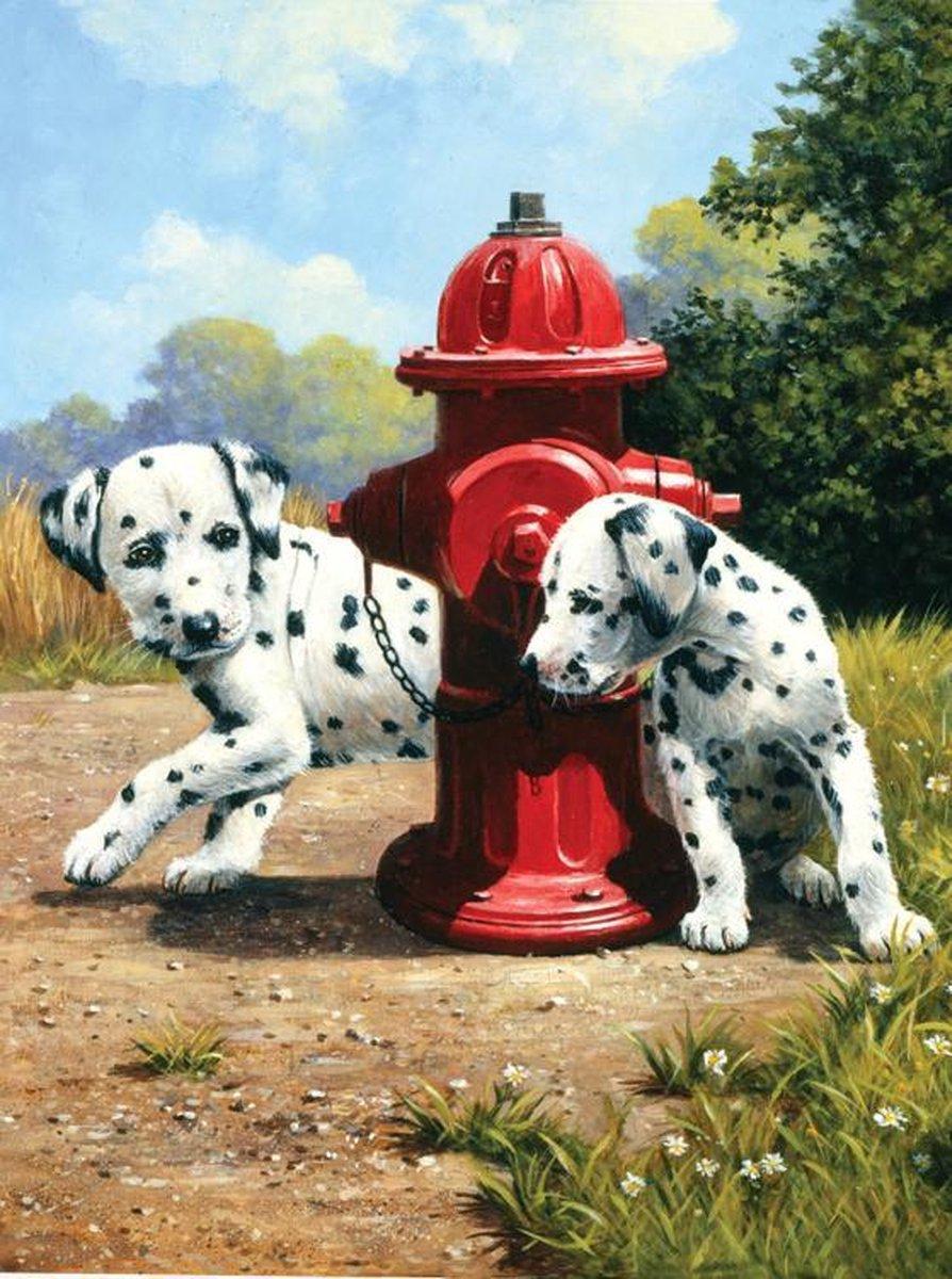 Schilderen op nummer - Paint by numbers - Dalmatier honden bij brandkraan 22x30cm - Schilderen op nummer volwassenen - Paint by numbers volwassenen