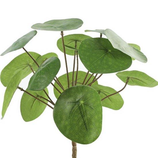Countryfield - Pilea - peperomioides - S - Groen - Pannekoekplant