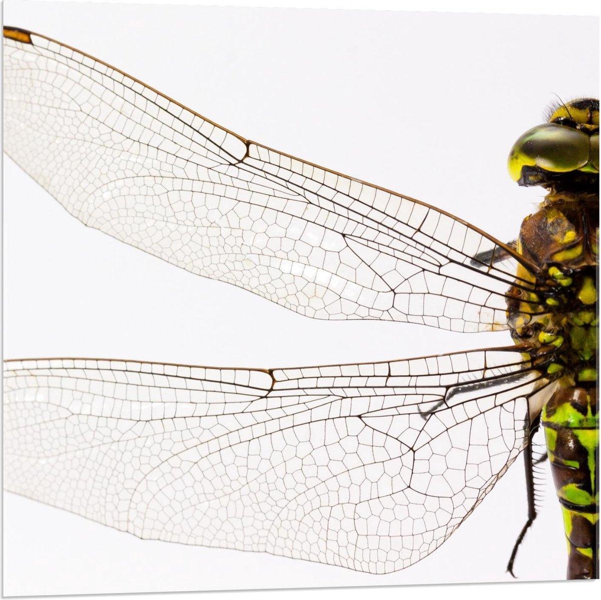 Plexiglas - Vleugels Close-Up - 80x80cm Foto op Plexiglas (Met Ophangsysteem)