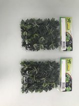 neppe waterplantjes