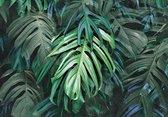 Fotobehang Monstera XXL - Tropical Grote Bladeren - 368cm x 254 cm - groen