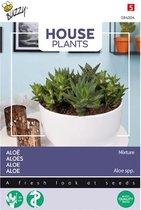 Buzzy® House Plants Aloë gemengde soorten