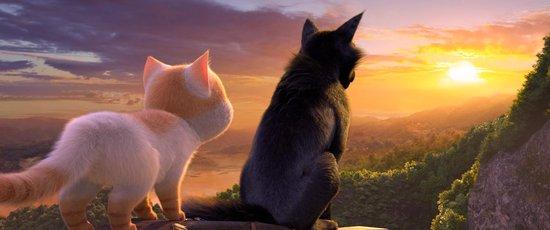 Cats op zoek naar Kattopia
