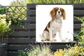 Schattige Cavalier King Charles-spaniël Tuinposter 200x200 cm - Tuindoek / Buitencanvas / Schilderijen voor buiten (tuin decoratie) XXL / Groot formaat!