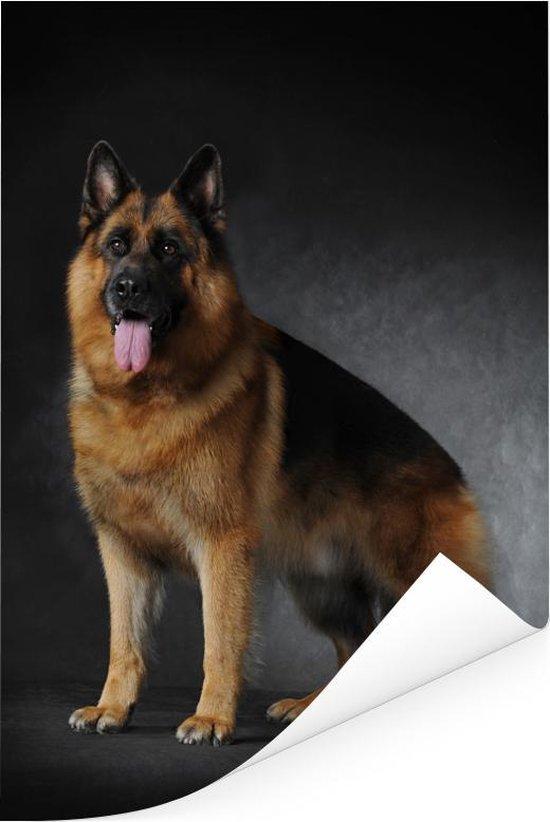 Portret van een Duitse Herder met zwarte achtergrond Poster 80x120 cm - Foto print op Poster (wanddecoratie woonkamer / slaapkamer) / Huisdieren Poster