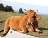 Rustende koe met horens Tuinposter 200x100 cm - Tuindoek / Buitencanvas / Schilderijen voor buiten (tuin decoratie) XXL / Groot formaat!