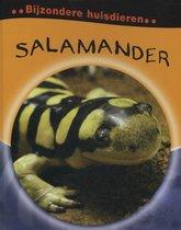 Bijzondere huisdieren  -   Salamander