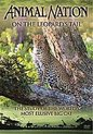 On The Leopard'S Trail