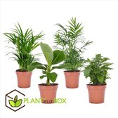PLANT IN A BOX Trendy kamerplanten mix - Set van 4 stuks - pot ⌀12 cm - Hoogte ↕ 25 - 40 cm
