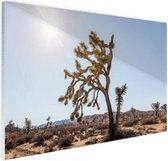 Woestijn met bomen Glas 180x120 cm - Foto print op Glas (Plexiglas wanddecoratie) XXL / Groot formaat!
