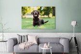 Een Labrador Retriever ligt in het gras Canvas 180x120 cm - Foto print op Canvas schilderij (Wanddecoratie woonkamer / slaapkamer) / Huisdieren Canvas Schilderijen XXL / Groot formaat!