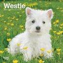 West Highland White Terrier Puppies 2020 Mini Wall Calendar