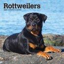 Rottweilers 2020 Mini 7x7