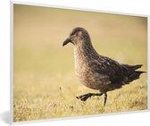 Foto in lijst - Grote jager loopt over droog gras fotolijst wit 60x40 cm - Poster in lijst (Wanddecoratie woonkamer / slaapkamer)