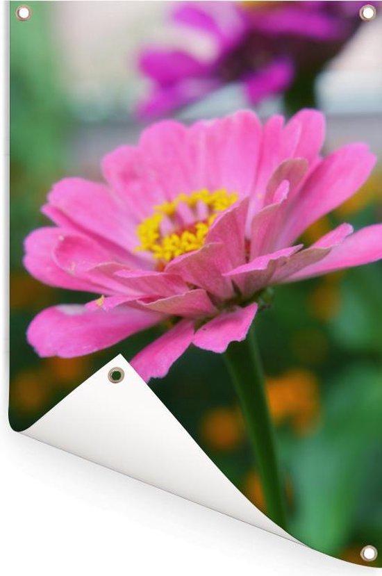 Zinnia bloeit in de tuin Tuinposter 40x60 cm - klein - Tuindoek / Buitencanvas / Schilderijen voor buiten (tuin decoratie)
