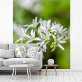 Fotobehang vinyl - Het wilde hoofd van de daslook bloem breedte 225 cm x hoogte 270 cm - Foto print op behang (in 7 formaten beschikbaar)