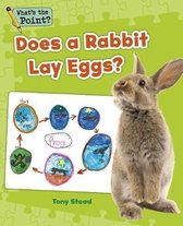 Does a Rabbit Lay Eggs?