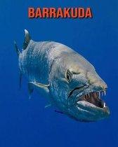 Barrakuda