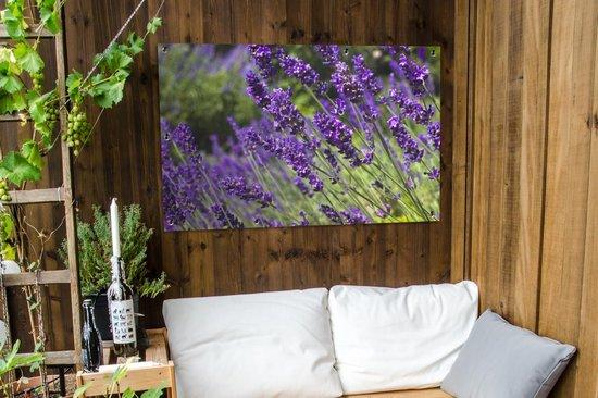 Bol Com Tuinposter De Lavendel Heldere Paarse Lavendel Tuinposter 120x80 Cm