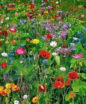 """200 gram  Veldbloemen WildBloemen  Vlinders en Bijen - Zadenmix 3 in1 MIX  """"Help de Natuur"""""""