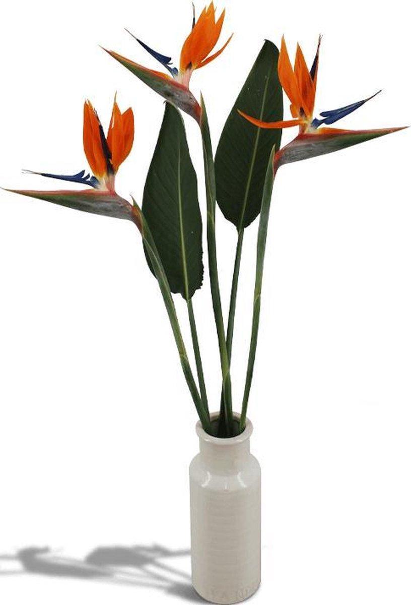 Strelitzia (Paradijsvogelbloem) boeket in speciale cadeauverpakking. Echte bloemen!