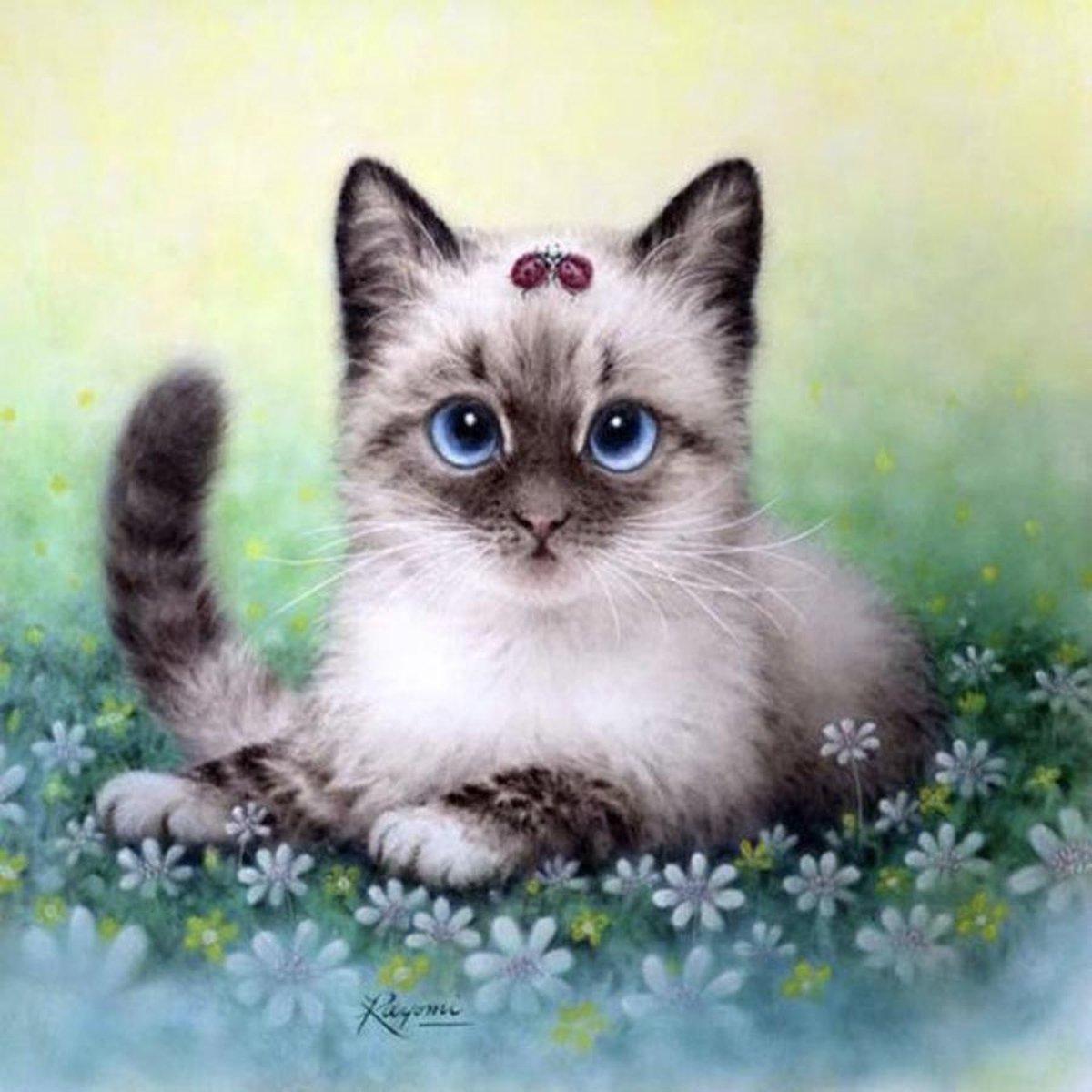 SEOS Shop ® Diamond Painting - Volwassenen - Volledig - Hobby Pakket - Kitten - 40x40 cm - Vierkant - Dotz