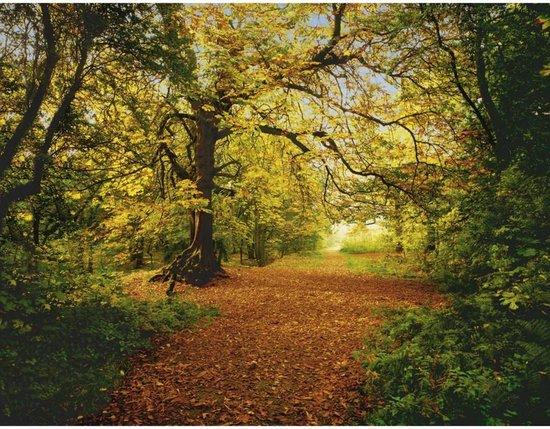 Komar Behang Autumn Forest fotobehang
