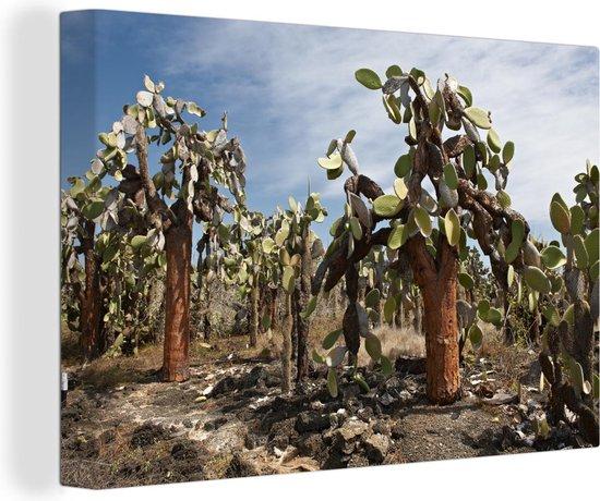 Cactussen Galapagoseilanden bij Ecuador Canvas 30x20 cm - klein - Foto print op Canvas schilderij (Wanddecoratie woonkamer / slaapkamer) / Zee en Strand