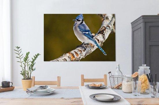 Vlaamse gaai zit op een berken tak Canvas 140x90 cm - Foto print op Canvas schilderij (Wanddecoratie woonkamer / slaapkamer)