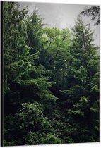 Dibond –Bomen in het Bos– 30x40cm Foto op Aluminium (Wanddecoratie van metaal)