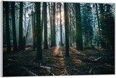 Plexiglas –Bomen met Losse Takken en Zon– 60x40 (Wanddecoratie op Plexiglas)